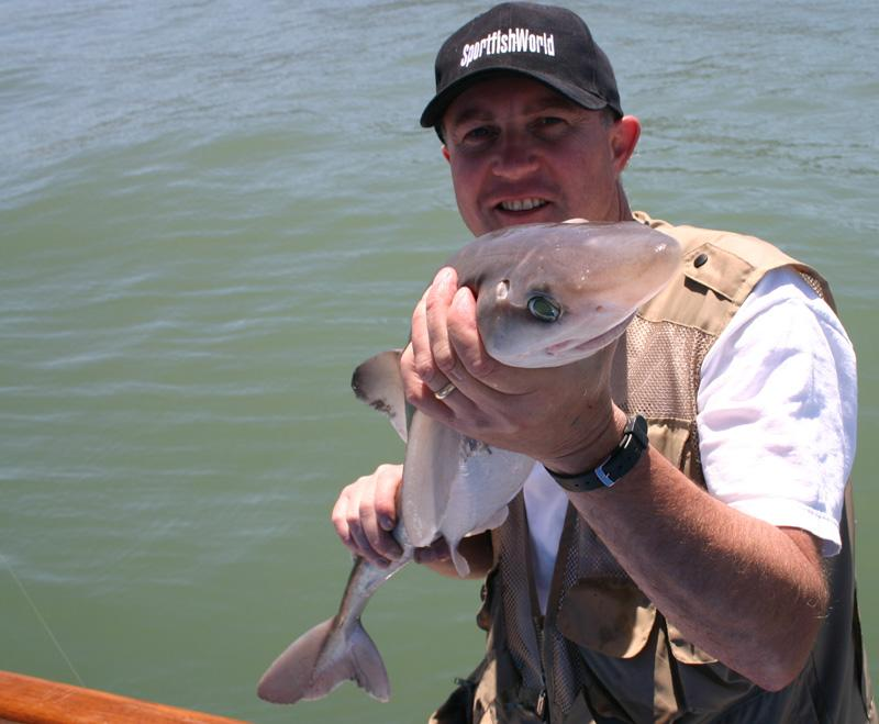 Sand Shark - Scotty Flotre with a San Francisco Bay Sand Shark. Photo Bob Fisher. -SportfishWorld &copy Copyright 2003 All rights reserved