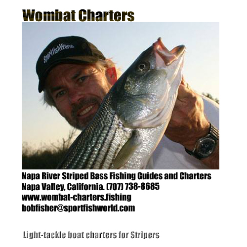 Napa River Striped Bass Fishing Guides and Charters. Napa Valley Wine Country Boat Tours, Napa California, USA